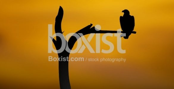 Eagles Flying Against Sunsets Photos - Boxist com Blog